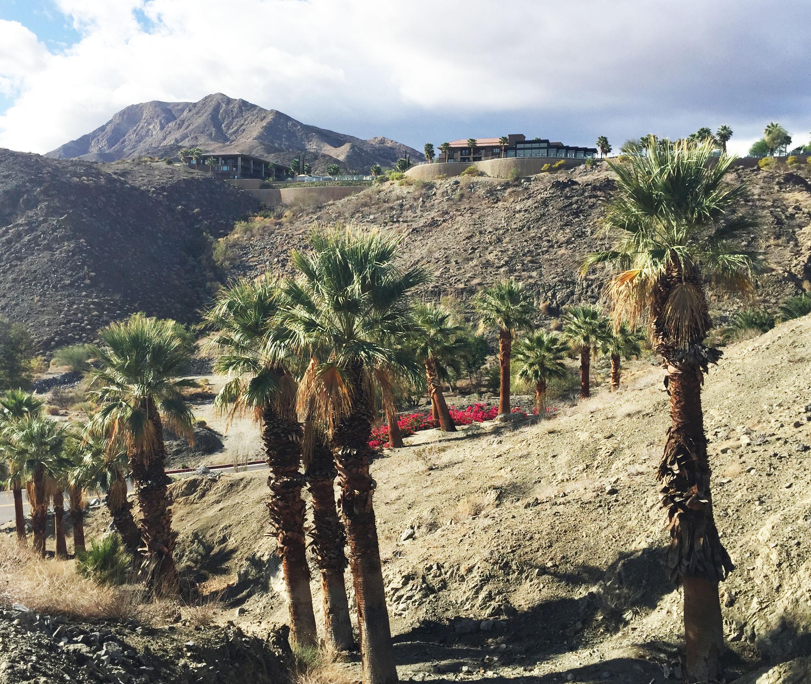 Palm-Springs2