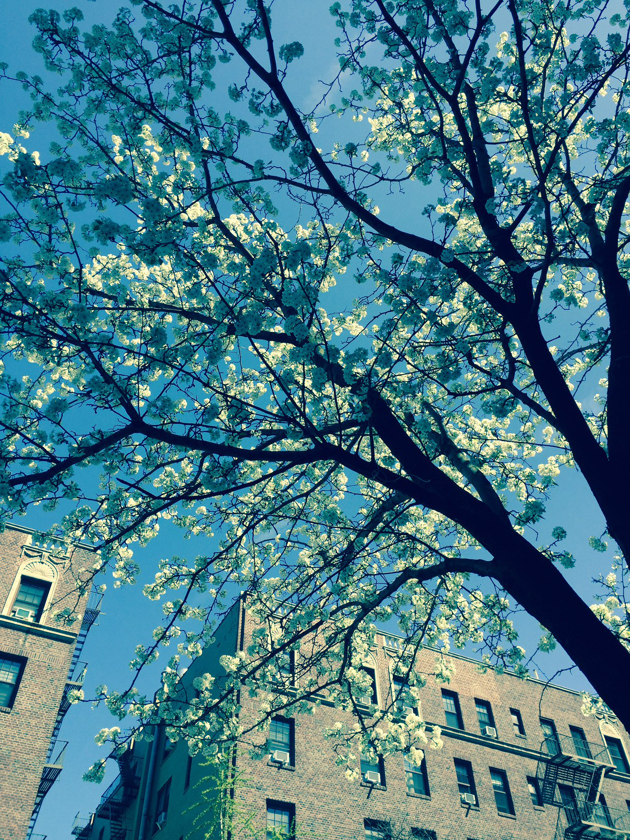 Beautiful-Blooms-NYC2