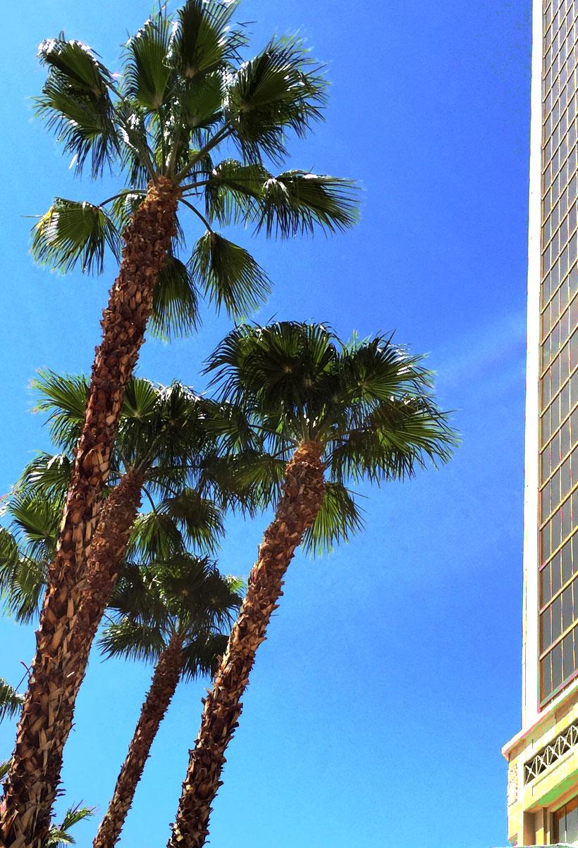 Palm-Tree-Pic
